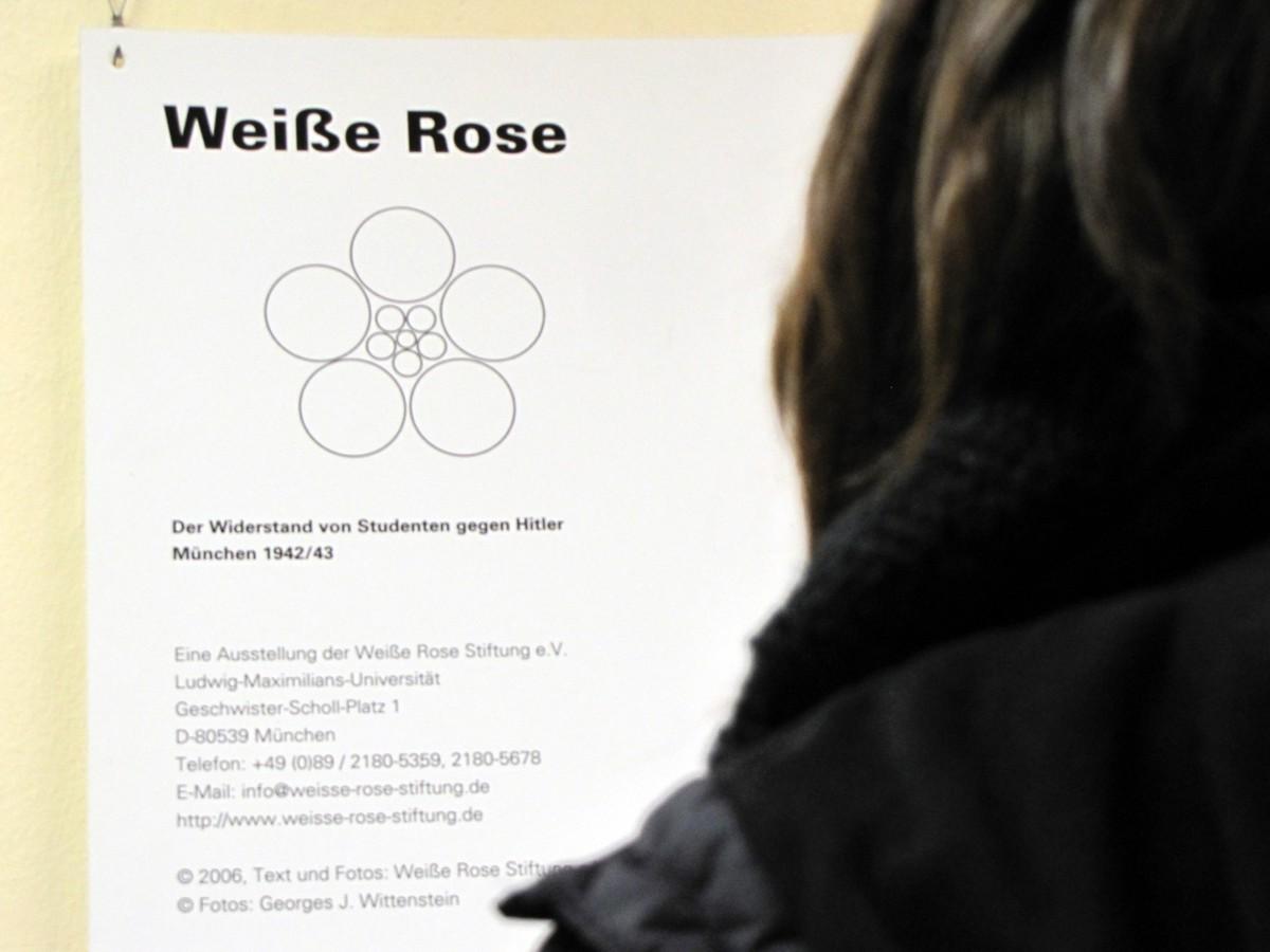weiße rose widerstand